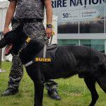 Câinele de la Antidrog a învățat cum miroase șpaga și a mușcat toată secția de poliție!