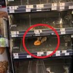 Doi șoricei mănâncă un covrig în vitrina unui magazin din București. Cum or fi intrat acolo fără mască?