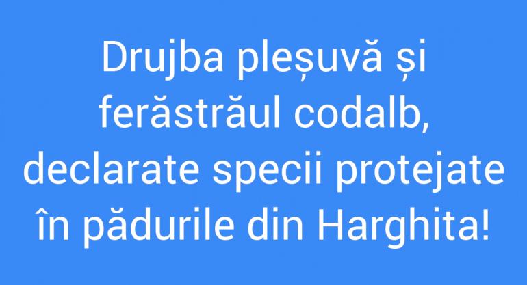 Polish_20210721_164345262